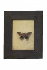 Moth by Rob Kamin