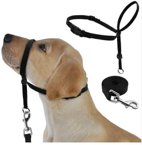 Dog E Collar Fitting