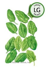 Botanical Interests Baby Greens Spinach