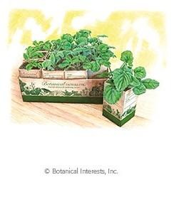 "Botanical Interests 1 1/2"" Paper Pot Set"