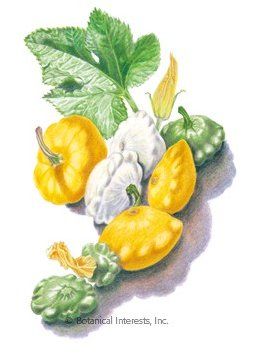 Botanical Interests Squash Summer Jaune et Verte  (Patty Pan) Org