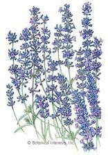 Botanical Interests Lavender Provence Blue