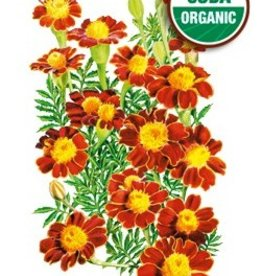 Botanical Interests Marigold French Red Metamorph Org