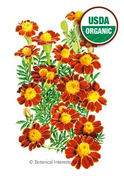 Botanical Interests Marigold French Red Metamorph Org