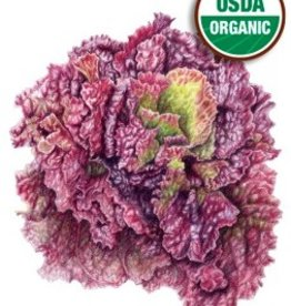 Botanical Interests Lettuce Leaf Red Sails Org
