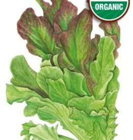 Botanical Interests Lettuce Leaf Salad Bowl Blend Org