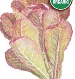 Botanical Interests Lettuce Romaine Rouge d'Hiver Org