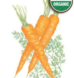Botanical Interests Carrot Danvers 126 Org