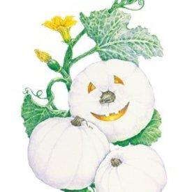 Botanical Interests Pumpkin Lumina (White)