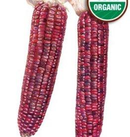 Botanical Interests Corn Dent Bloody Butcher Org