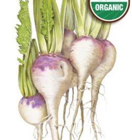 Botanical Interests Turnip Purple Top White Globe Org