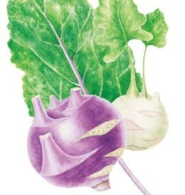 Botanical Interests Kohlrabi Purple and White Vienna
