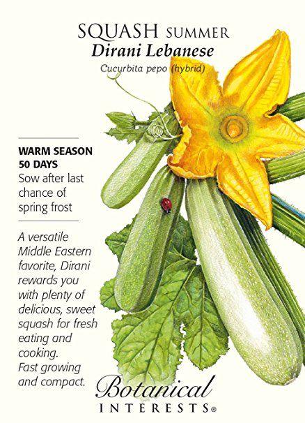 Botanical Interests Squash Summer Dirani Lebanese