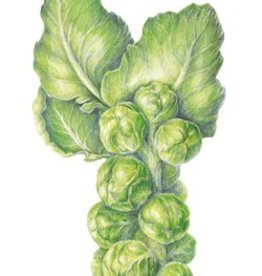 Botanical Interests Brussels Sprouts Long Island Imp