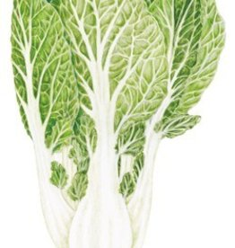 Botanical Interests Bok Choy White Stem