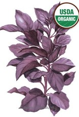 Botanical Interests Basil Purple Petra Org