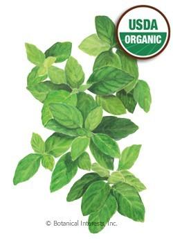 Botanical Interests Basil Lemon Org