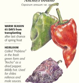 Botanical Interests Pepper Chile Ancho / Poblano