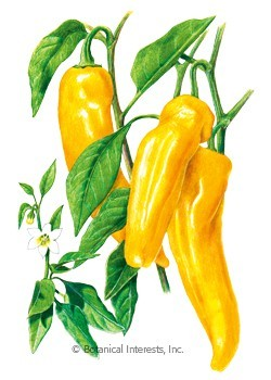 Botanical Interests Pepper Sweet Italian Marconi Golden