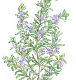 Botanical Interests Rosemary