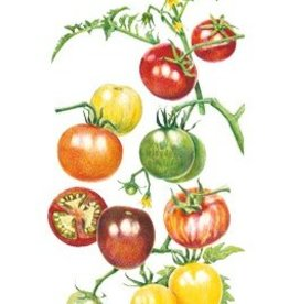 Botanical Interests Tomato Cherry Rainbow Blend
