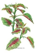 Botanical Interests Amaranth Edible Red Leaf