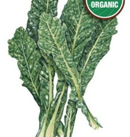 Botanical Interests Kale Italian Nero Toscana Org