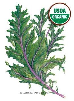 Botanical Interests Kale Red Winter Org