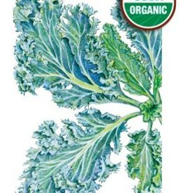 Botanical Interests Kale Dwarf Blue Curled Org