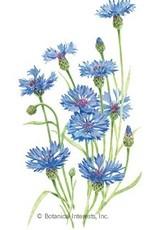 Botanical Interests Bachelor Button Blue Boy
