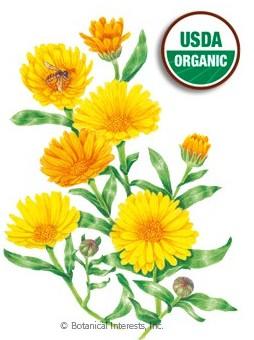 Botanical Interests Calendula Resina Org