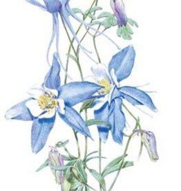 Botanical Interests Columbine Rocky Mountain Blue