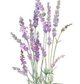 Botanical Interests Lavender English Tall