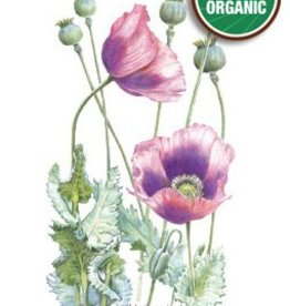 Botanical Interests Poppy Bread Seed Org