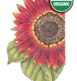 Botanical Interests Sunflower Evening Sun Org