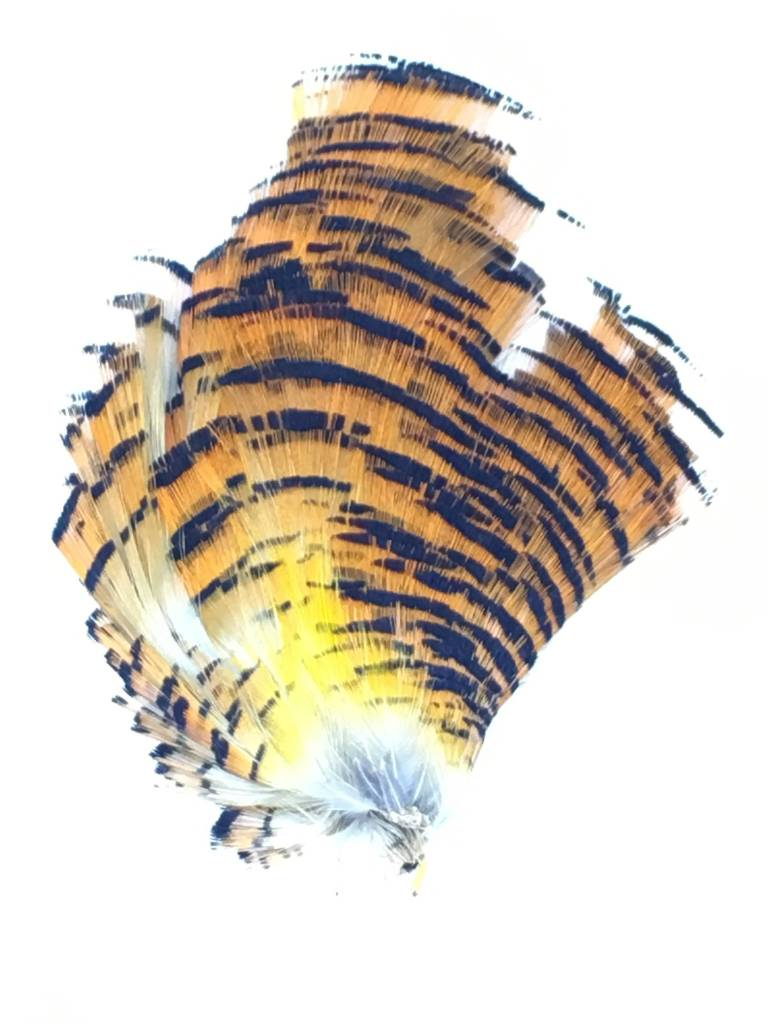 Fish Hunter Golden Pheasant Tippet Section