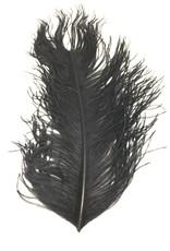 Fish Hunter Ostrich Plume -