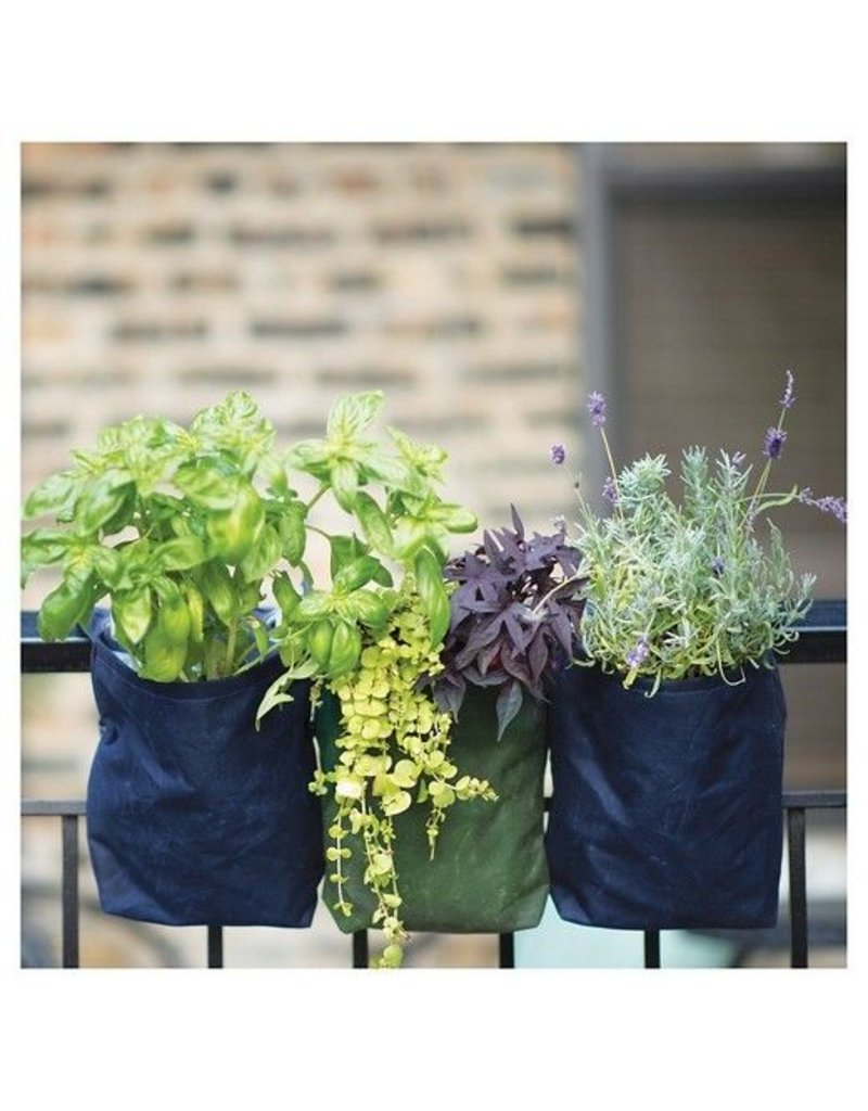 Modern Sprout GrowPack-Spice