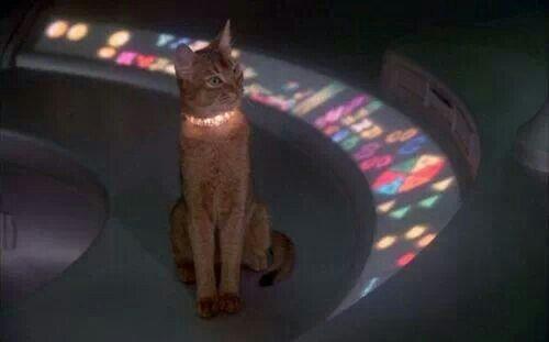Wild & Wolf Cosmic Cat Pinball