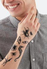 Tattly Tattly Pack Natural Curiosities