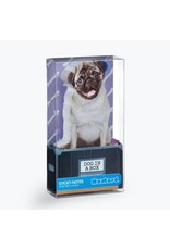 Dog in a Box Sticky Notes