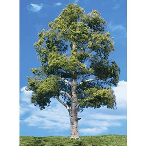 "Woodland Scenics . WOO WATERS EDGE TREES 1 1/4""""- 2"""""