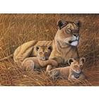 Royal (art supplies) . ROY PBN JR LG AFRICAN LIONESS & CU