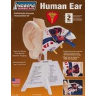 Lindberg . LND HUMAN EAR