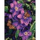 Dimensions . DMS Clematis&Butterflies 11X14 Pbn