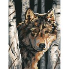 Dimensions . DMS WOLF AMONG BIRCHES 9X12 PBN
