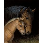 Dimensions . DMS GENTLE TOUCH MARE/FOAL P BY#