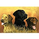 Colart Color & Co . COL LABRADOR DOGS IN MARSH 12X16 PAINT BY #