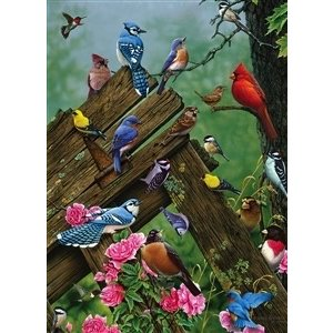 Cobble Hill . CBH BIRDS OF FOREST 1000PC
