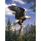 Colart Color & Co . COL BALD EAGLE PAINT BY #